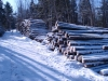 Log pile at Blue Ribbon Farm